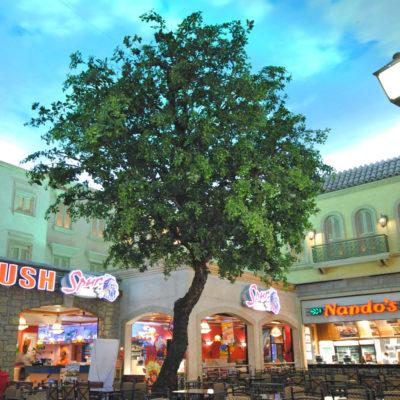 ornamental-ficus-tree-6.0mH-x-4.0mW-LRGT007.jpg
