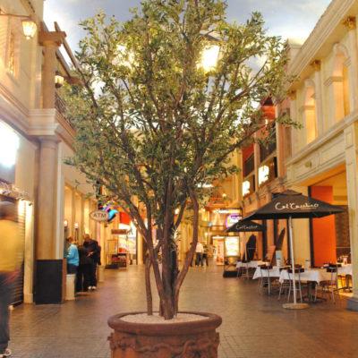 ornamental-olive-treemulti-stem-3.0mH-x-1.5mW-LRGT0014-1.jpg
