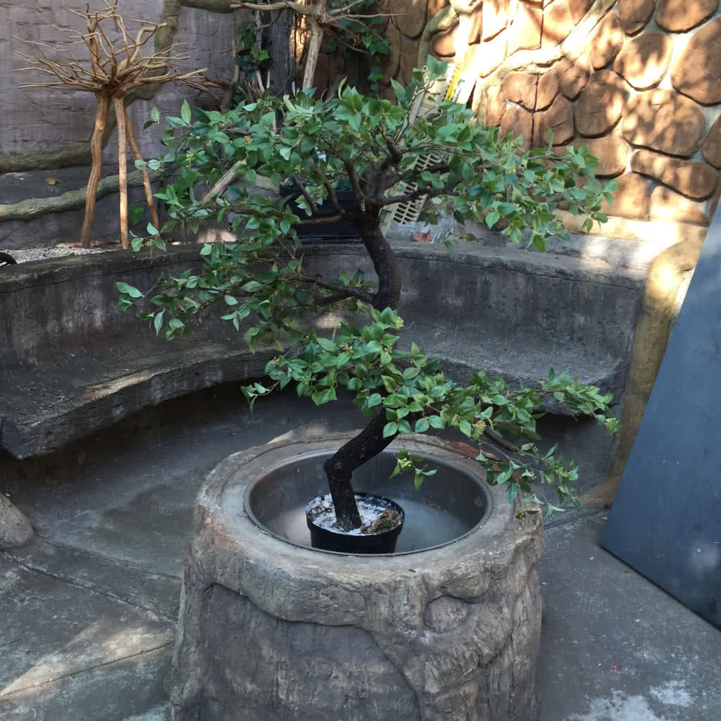Trees For Small Spaces: Buy Artificial Ornamental Stinkwood Bonsai Style Tree 1