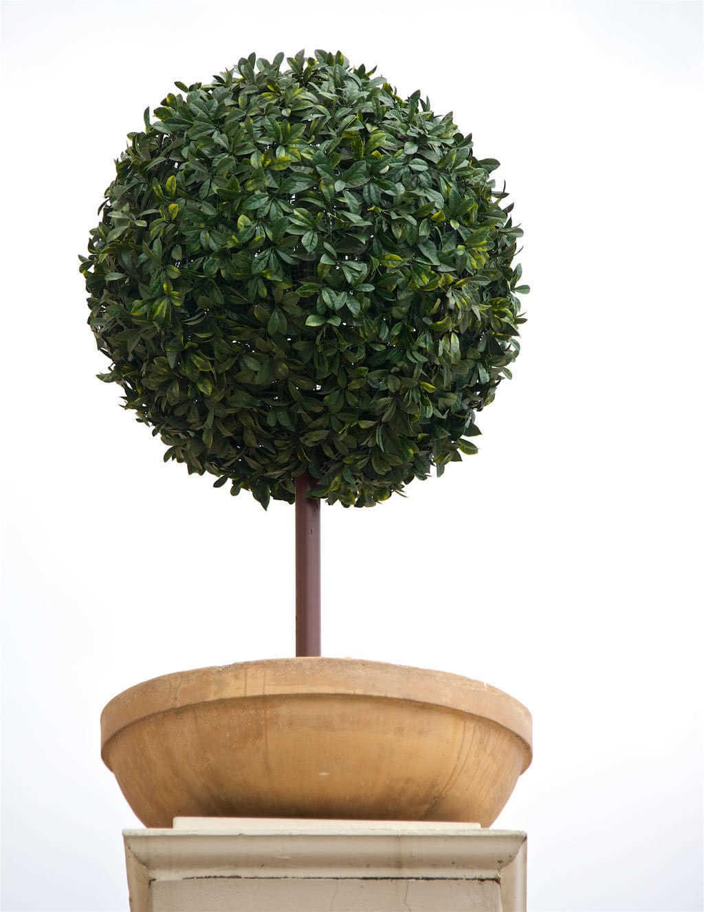 Buy Instagreen Privet Outdoor Topiary 1 0m Diameter Ball On Stem Distinctive Spaces Online Shop