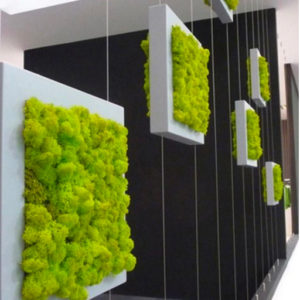 Preserved Moss Displays 05