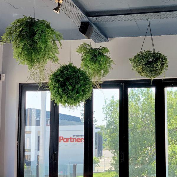 distinctive-vertical-gardens-hanging-plants-004