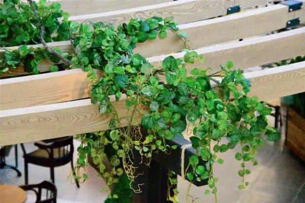 Distinctive-silks-hanging-small-plants-003