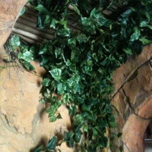 Distinctive-silks-hanging-small-plants-021
