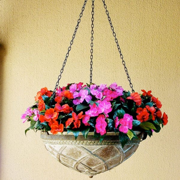 colourful-small-plants-002