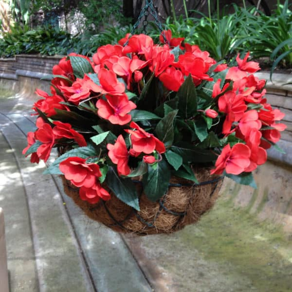 colourful-small-plants-003