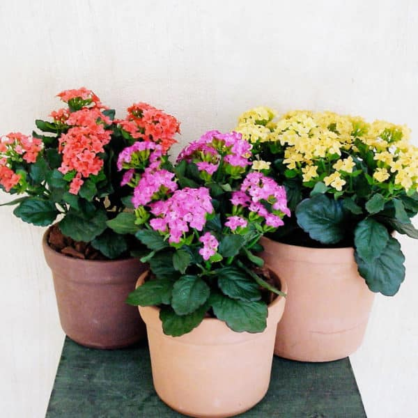 colourful-small-plants-005