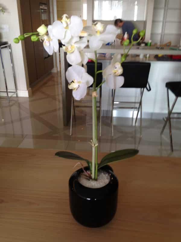 distinctive-silks-desktop-plants-007