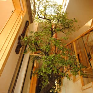 distinctive-silks-structured-trees-001