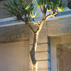 distinctive-silks-structured-trees-005