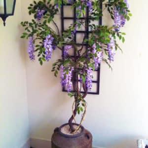 flowering-trees-002
