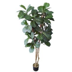 standard-trees-002