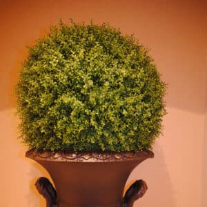 topiaries-trees-002