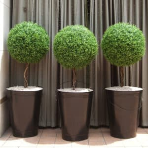 topiaries-trees-004